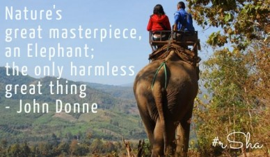 Nature's great masterpiece, an elephant; the only harmless great thing - john donne #rsha