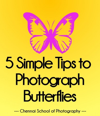 5 simple tips to photograph butterflies --- chennai school of photography ---