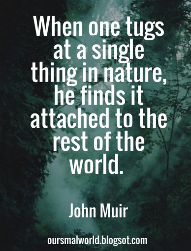 When one tugs at a single thing in nature, he finds it attached to the rest of the world. john muir oursmalworld.blogsot.com