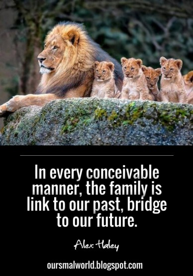 In every conceivable manner, the family is link to our past, bridge to our future. alex haley oursmalworld.blogspot.com