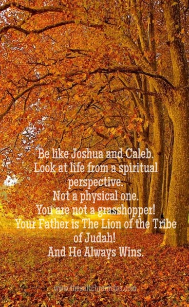 Be like joshua and caleb. look at life from a spiritual perspective. not a physical one. you are not a grasshopper!your father is the lion of the tribe of judah! and he always