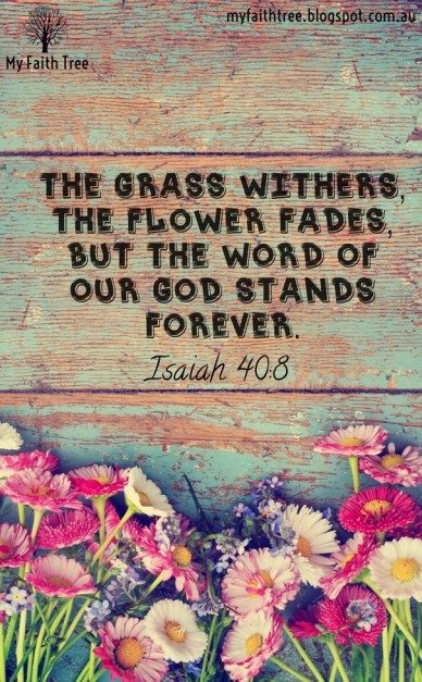 The grass withers, the flower fades, but the word of our god stands forever. isaiah 40:8 my faith tree myfaithtree.blogspot.com.au