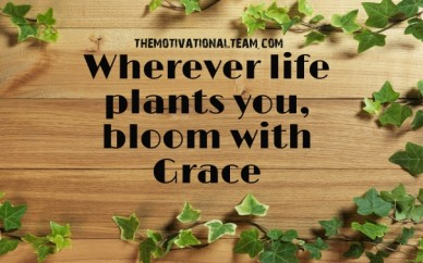 Wherever life plants you, bloom with grace themotivationalteam.com