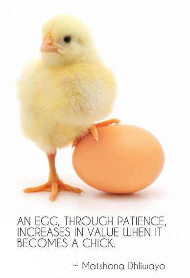 An egg, through patience, increases in value when it becomes a chick. ~ matshona dhliwayo