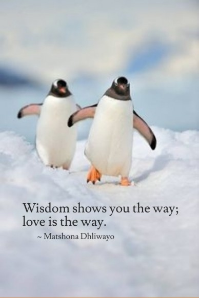 Wisdom shows you the way; love is the way. ~ matshona dhliwayo