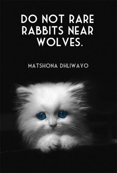 Do not rare rabbits near wolves. matshona dhliwayo