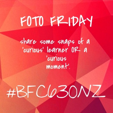 Foto friday share some snaps of a 'curious' learner or a 'curious moment'. #bfc630nz