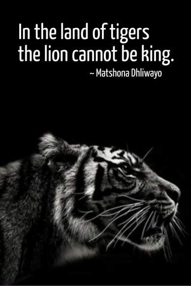 In the land of tigers the the lion cannot be king. ~ matshona dhliwayo