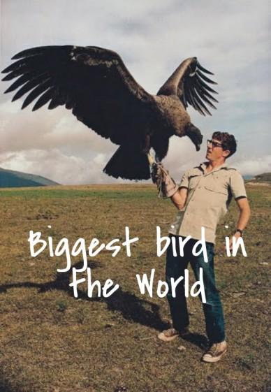 Biggest bird in the world
