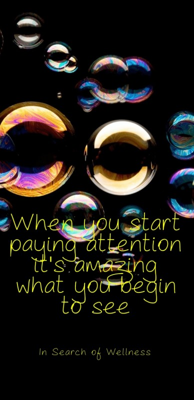 When you start paying attention it's amazing what you begin to see in search of wellness