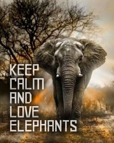 Keep calmandloveelephants