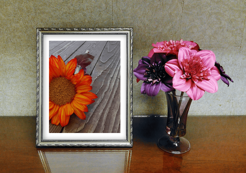 Flower,                Red,                Pink,                Plant,                Petal,                Mockup,                Inspiration,                Life,                Photo,                Image,                White,                Black,                Yellow,                 Free Image