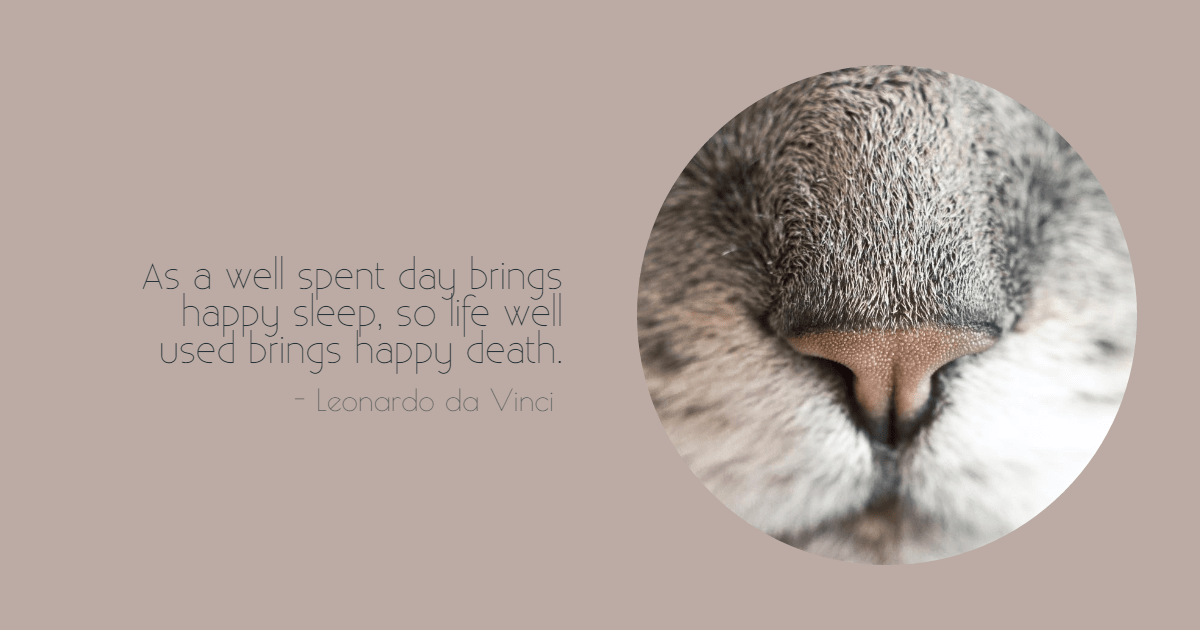 Nose,                Bird,                Close,                Up,                Head,                Owl,                Poster,                Text,                Quote,                Simple,                White,                 Free Image