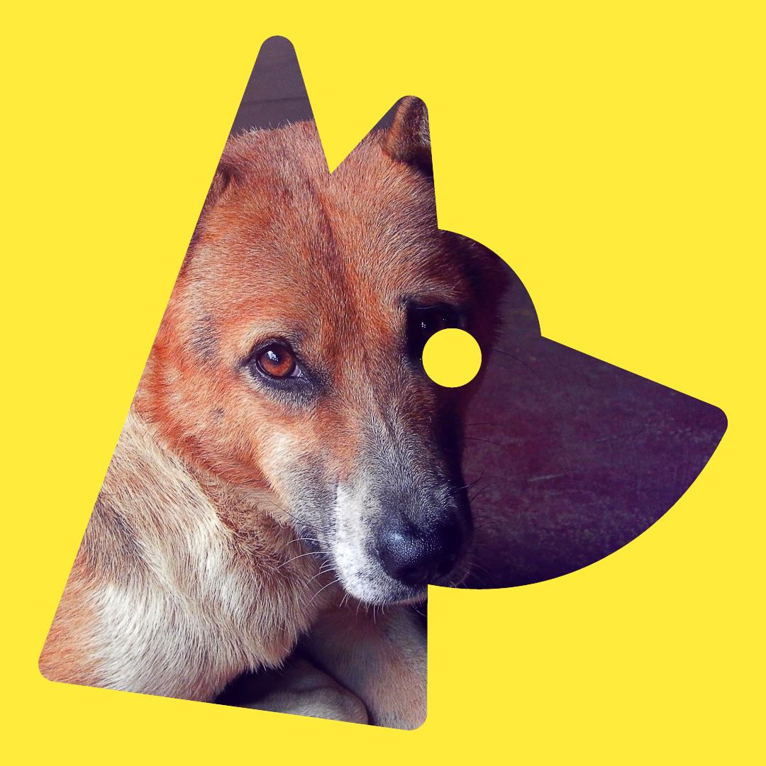 Mammal,                Vertebrate,                Nose,                Dog,                Like,                Illustration,                Avatar,                Black,                Yellow,                 Free Image
