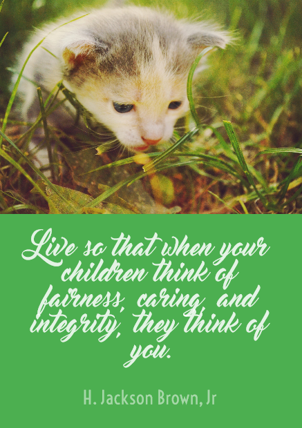 Mammal,                Fauna,                Cat,                Kitten,                Flower,                Poster,                Text,                Quote,                Simple,                White,                Black,                Yellow,                Lime,                 Free Image