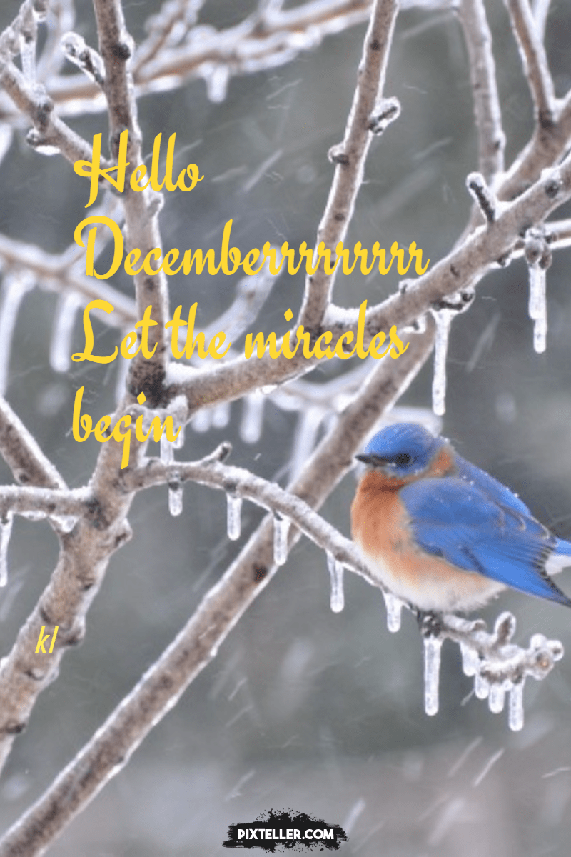 Branch,                Bird,                Fauna,                Winter,                Old,                World,                Flycatcher,                Poster,                Text,                Quote,                Simple,                White,                Black,                 Free Image