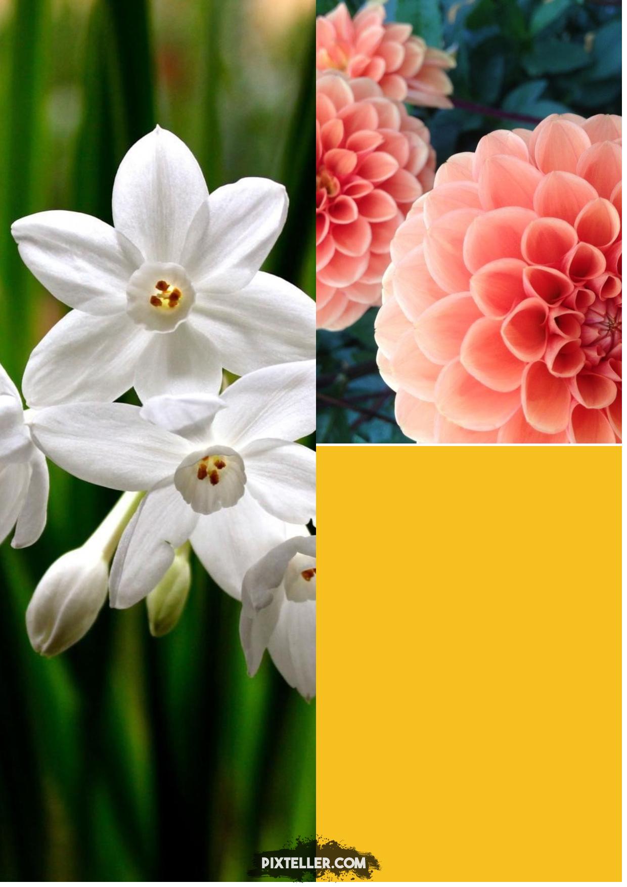 Collage,                Image,                Photos,                White,                Black,                Yellow,                 Free Image