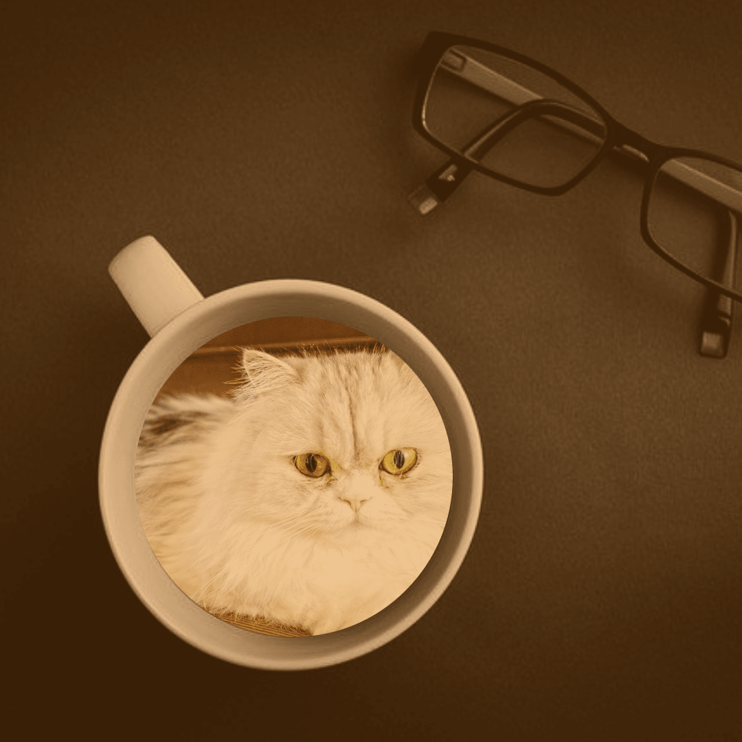 Cat, Glasses, Vision, Care, Eyewear, Mockup, Image, Avatar, Black, Yellow,  Free Image