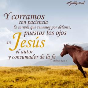 #verse