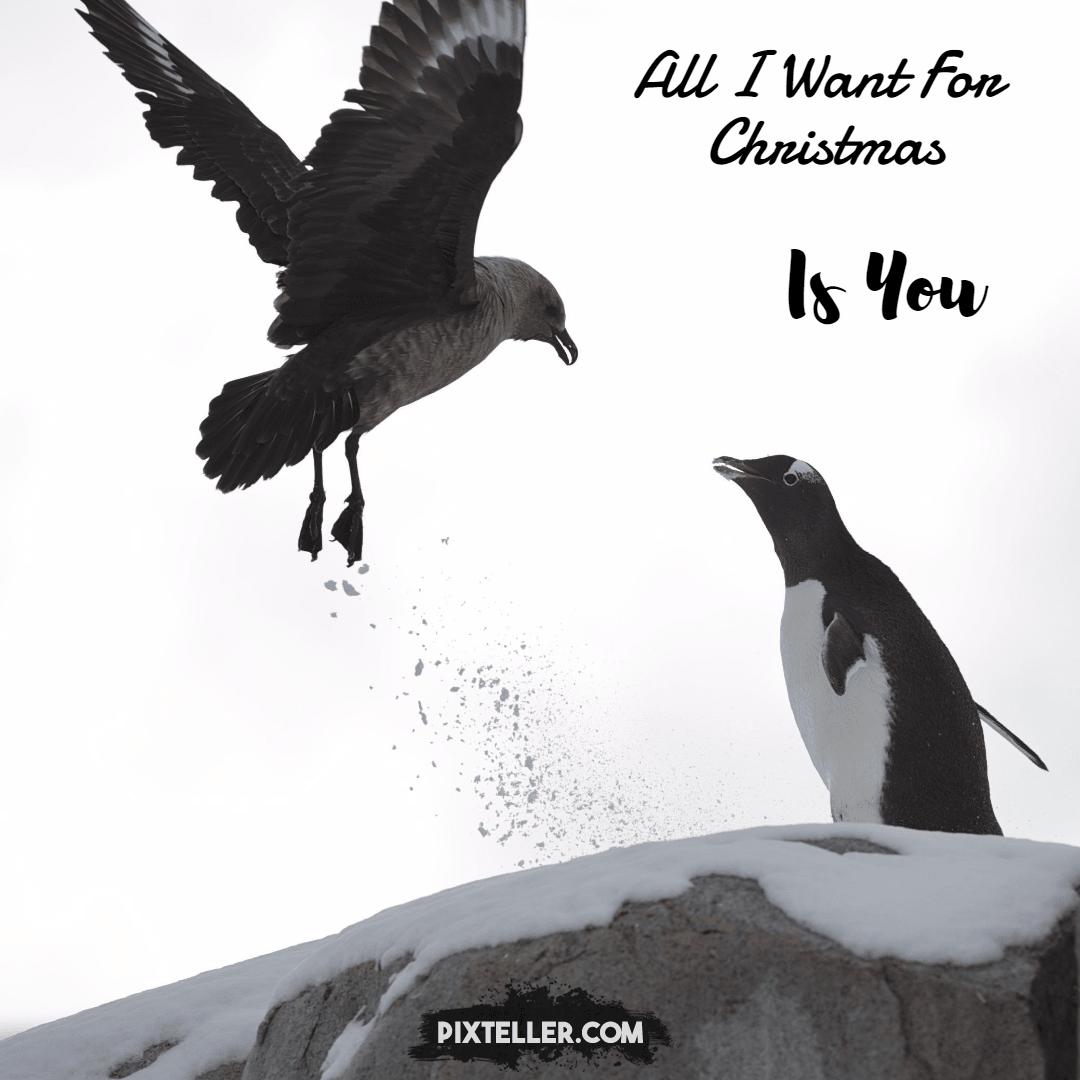 Bird,                Vertebrate,                Fauna,                Raven,                Perching,                White,                Black,                 Free Image