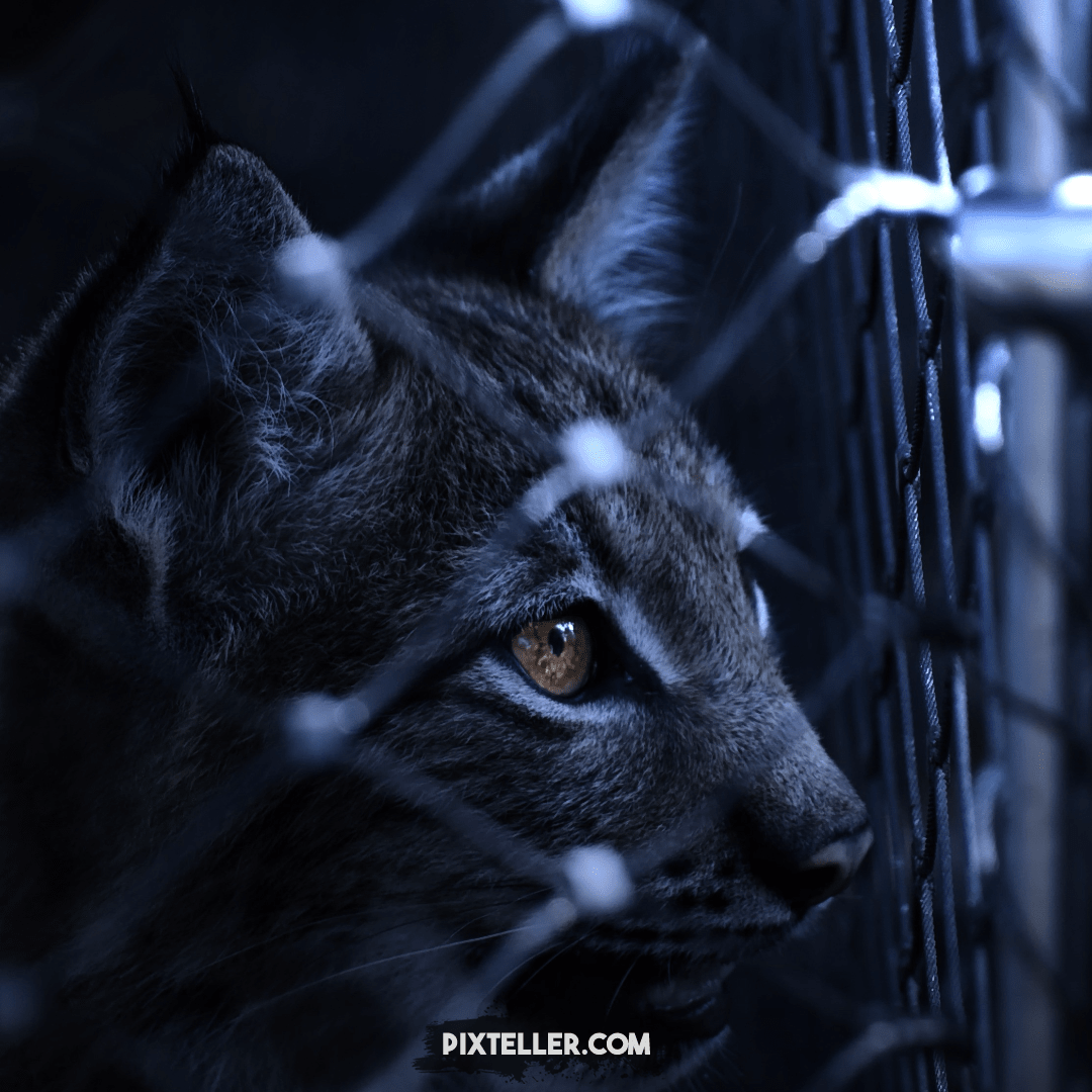 Black,                Mammal,                And,                White,                Whiskers,                Darkness,                 Free Image