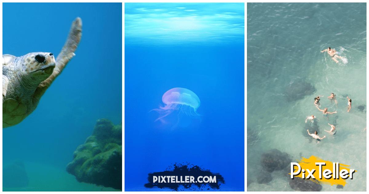 Collage,                Image,                Photos,                White,                Blue,                Aqua,                 Free Image