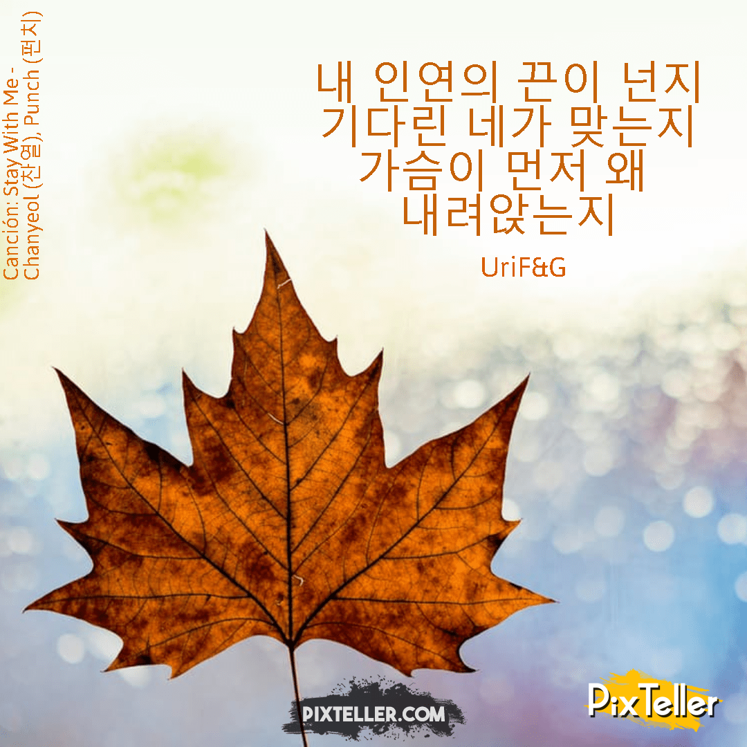 Tree,                Maple,                Leaf,                Plant,                Season,                White,                Red,                 Free Image