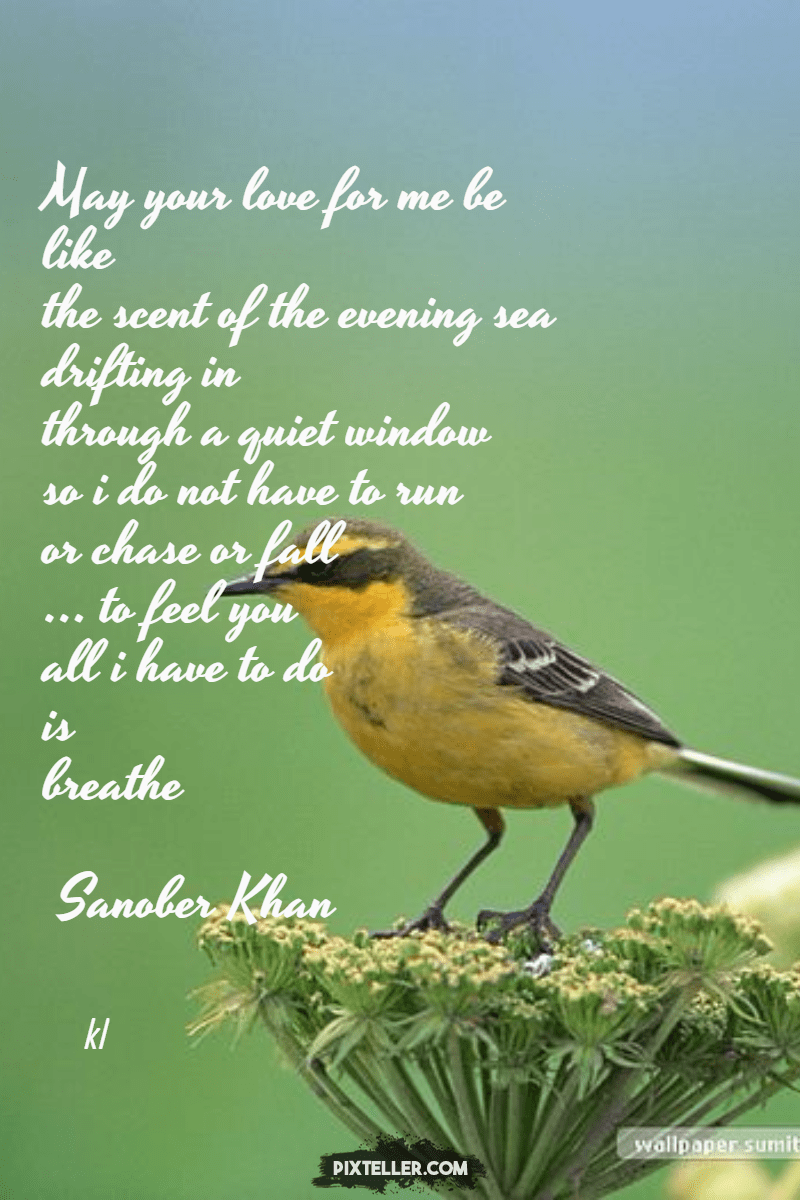 Bird,                Fauna,                Biology,                Perching,                Old,                World,                Flycatcher,                Poster,                Text,                Quote,                Simple,                White,                Black,                 Free Image