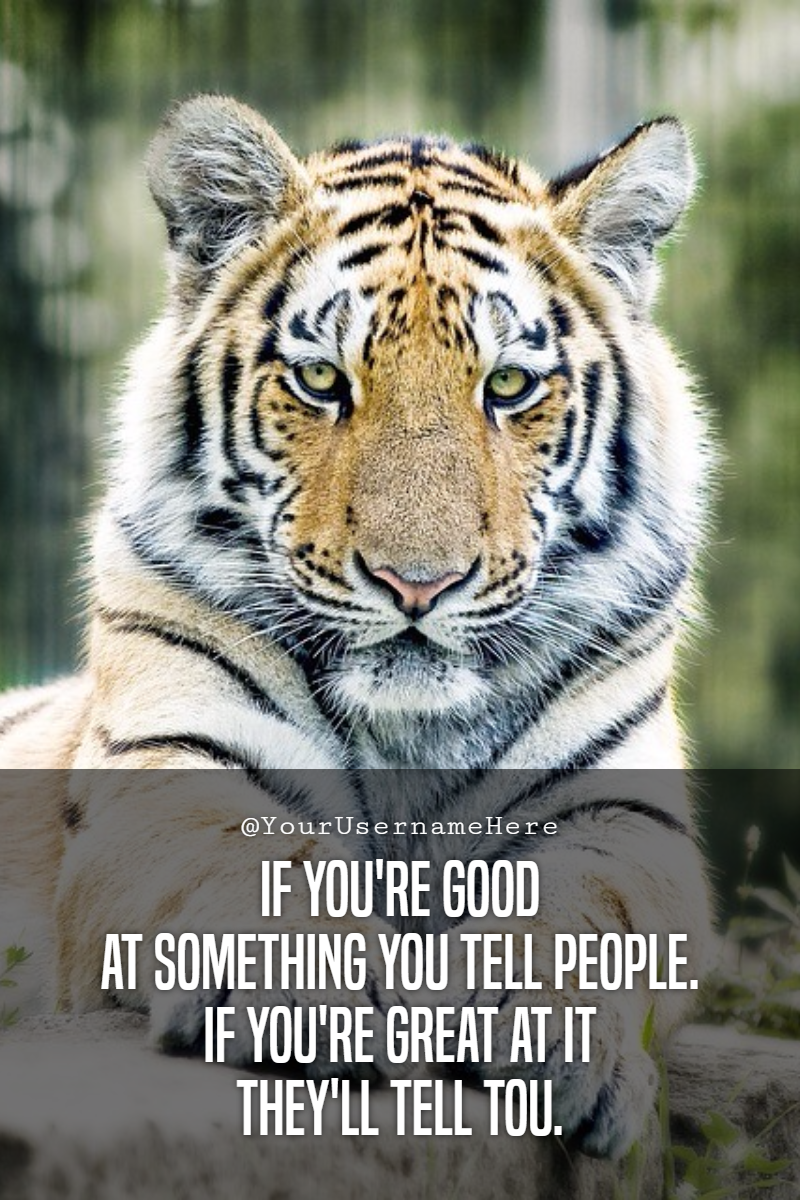 Tiger,                Mammal,                Fauna,                Wildlife,                Big,                Cats,                Quote,                Simple,                Poster,                White,                Black,                 Free Image