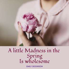 Madness in the spring #spring  #flower #madness