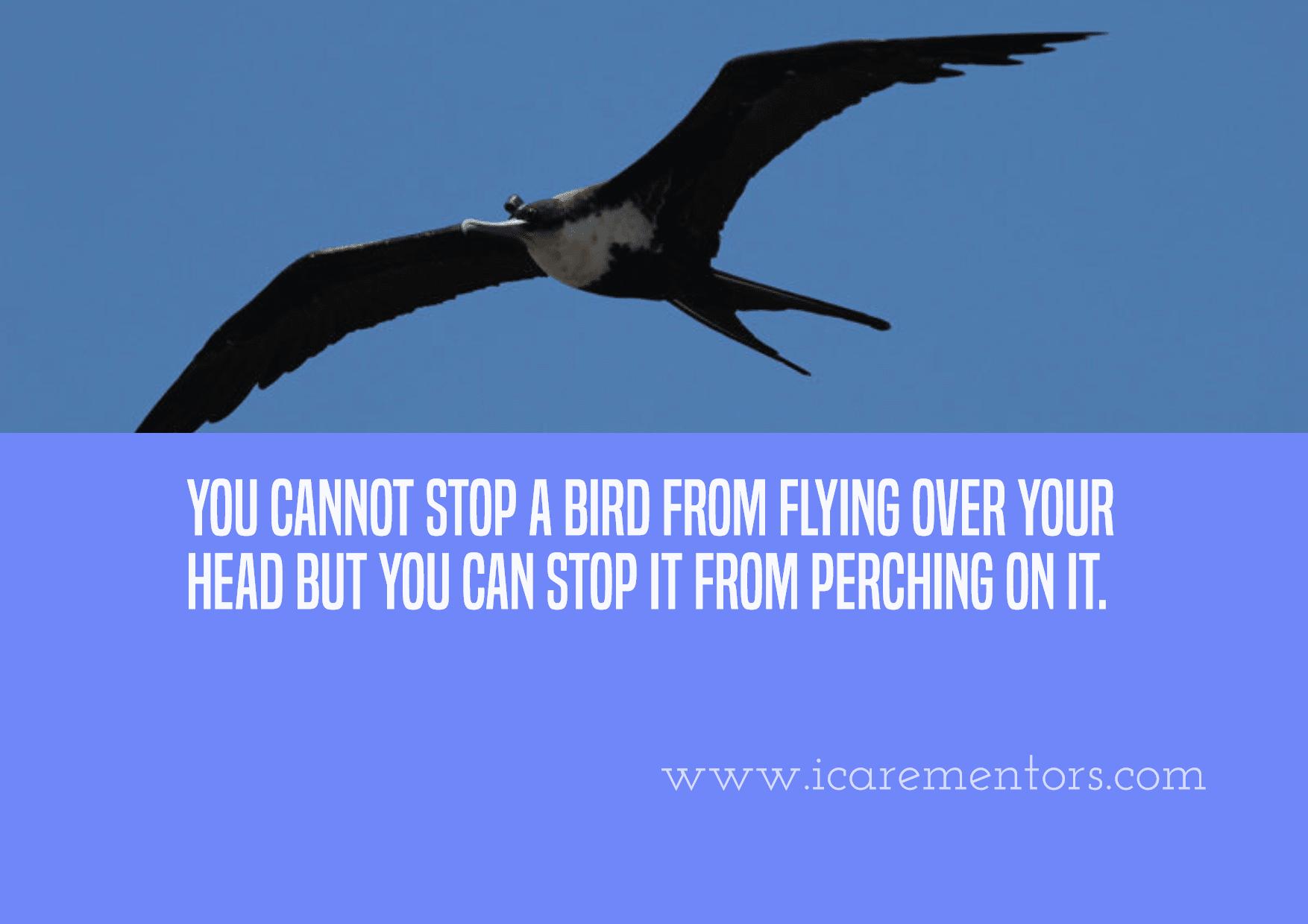 Fauna,                Bird,                Beak,                Sky,                Advertising,                Poster,                Text,                Quote,                Simple,                Blue,                Aqua,                 Free Image