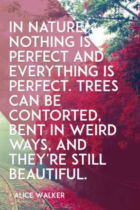 #nature #poster #quote