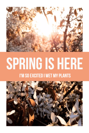 #flowers #spring #poster #simple