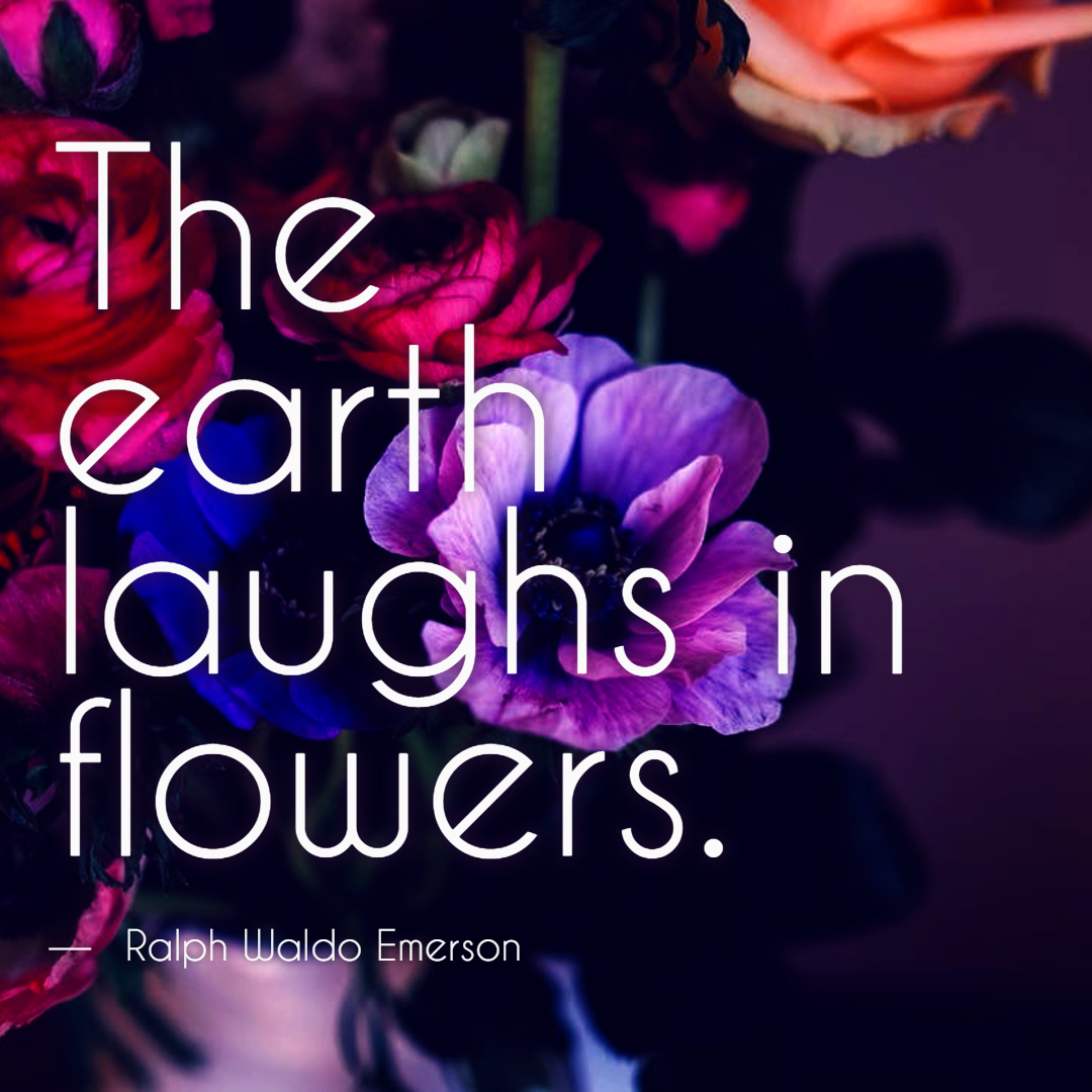 #flower #quote #simple Design  Template