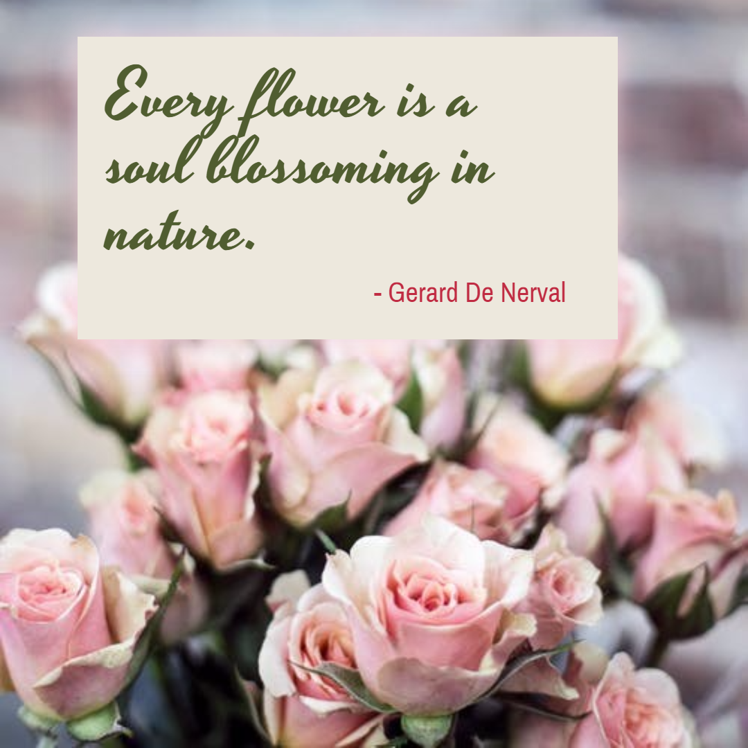 Pink,                Flower,                Arranging,                Plant,                Floristry,                Poster,                Quote,                Simple,                White,                Black,                 Free Image