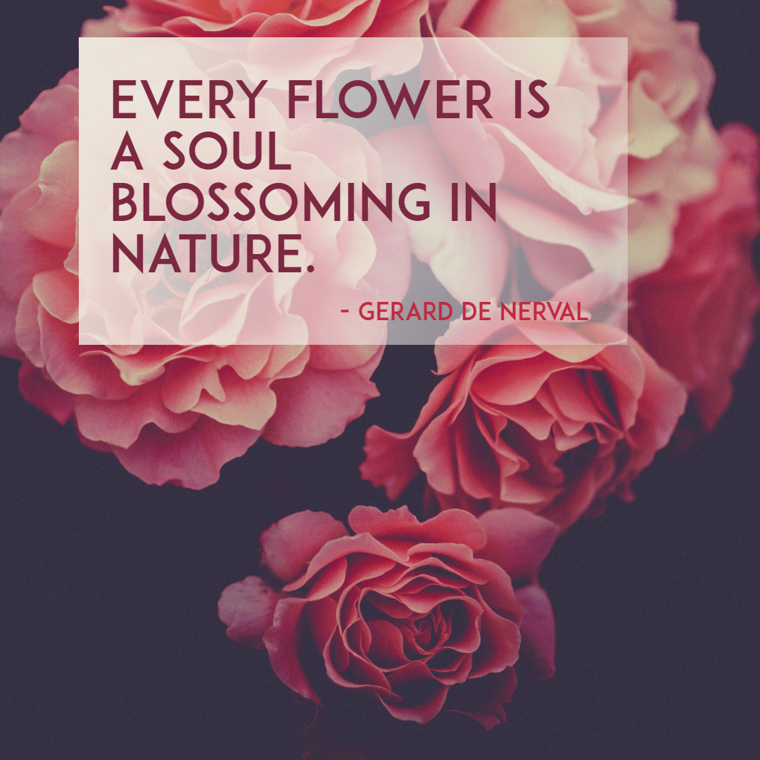 Pink,                Flower,                Plant,                Rose,                Garden,                Roses,                Poster,                Quote,                Simple,                White,                Black,                Red,                 Free Image