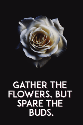 #quote #poster #flower #simple