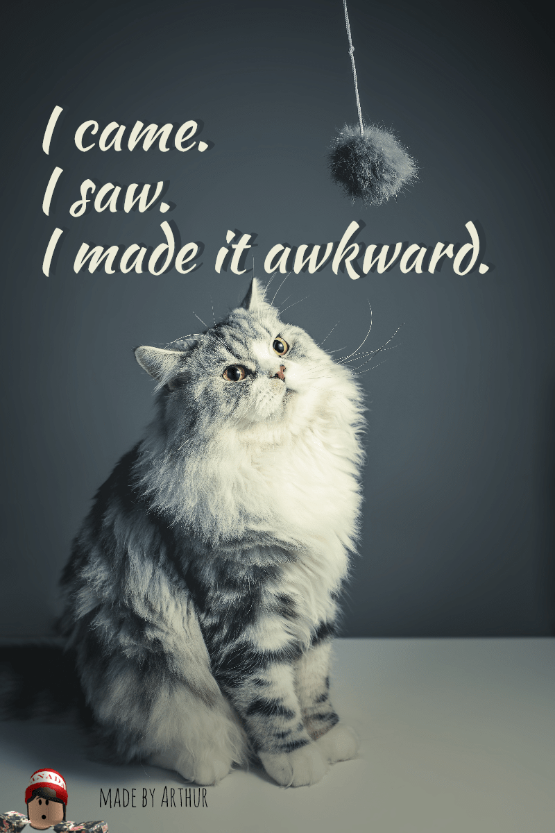 Cat,                Small,                To,                Medium,                Sized,                Cats,                Like,                Mammal,                Poster,                Quote,                Simple,                White,                Black,                 Free Image