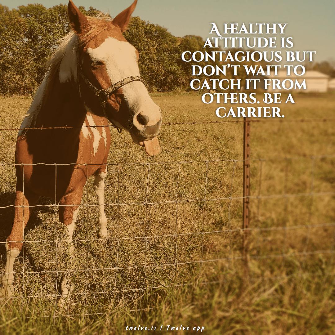 Horse,                Like,                Mammal,                Ecosystem,                Halter,                Fauna,                White,                Black,                Yellow,                Red,                 Free Image