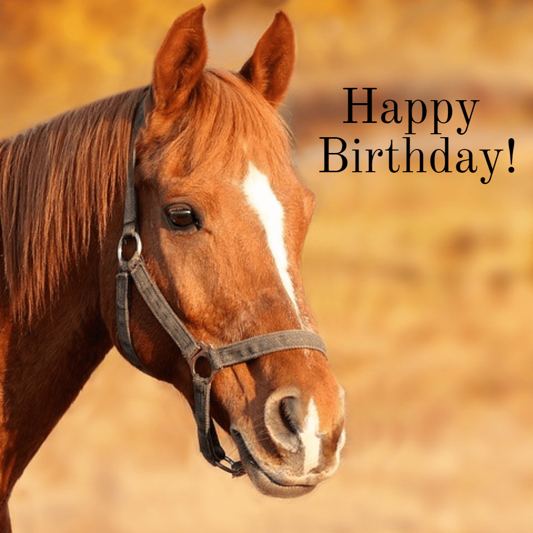 Mary Neff Happy Birthday Horse