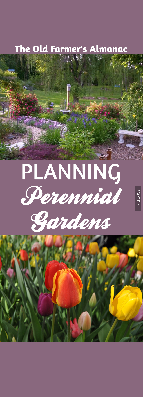 Flower,                Flowering,                Plant,                Tulip,                Spring,                Black,                Red,                 Free Image