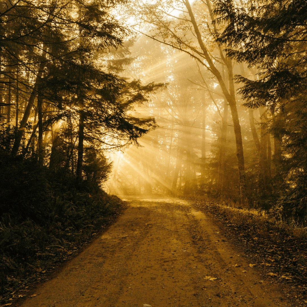 Habitat,                Atmospheric,                Phenomenon,                Forest,                Sunlight,                Morning,                Black,                Yellow,                Red,                 Free Image