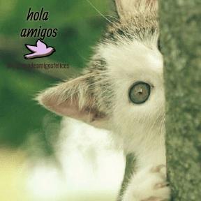 #amigos #hola #amistad  #instagram #imagen #foto #mariposas