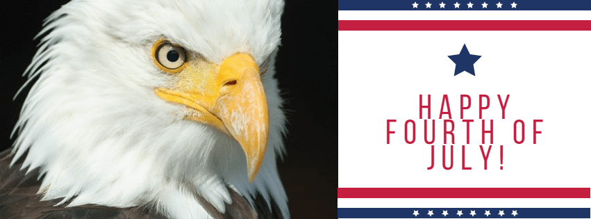 Bird,                Beak,                Vertebrate,                Of,                Prey,                Eagle,                Anniversary,                4thofjuly,                Happyforthofjuly,                Independenceday,                Independence,                Day,                America,                 Free Image
