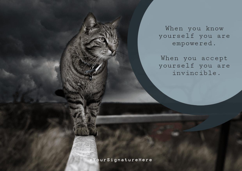 Cat,                Like,                Mammal,                Poster,                Funny,                White,                Black,                 Free Image