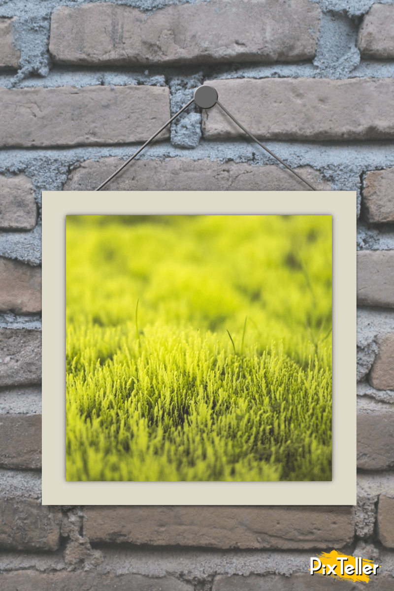 Green,                Grass,                Yellow,                Wall,                Picture,                Frame,                Mockup,                Image,                Avatar,                White,                Black,                 Free Image