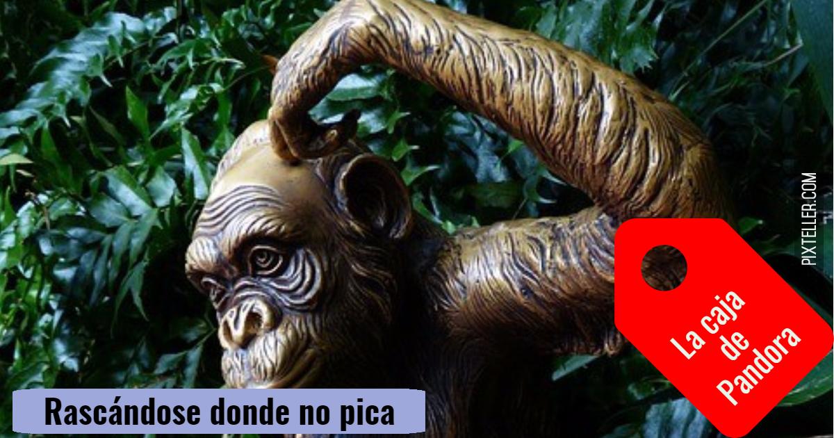 Great,                Ape,                Jungle,                White,                Black,                 Free Image