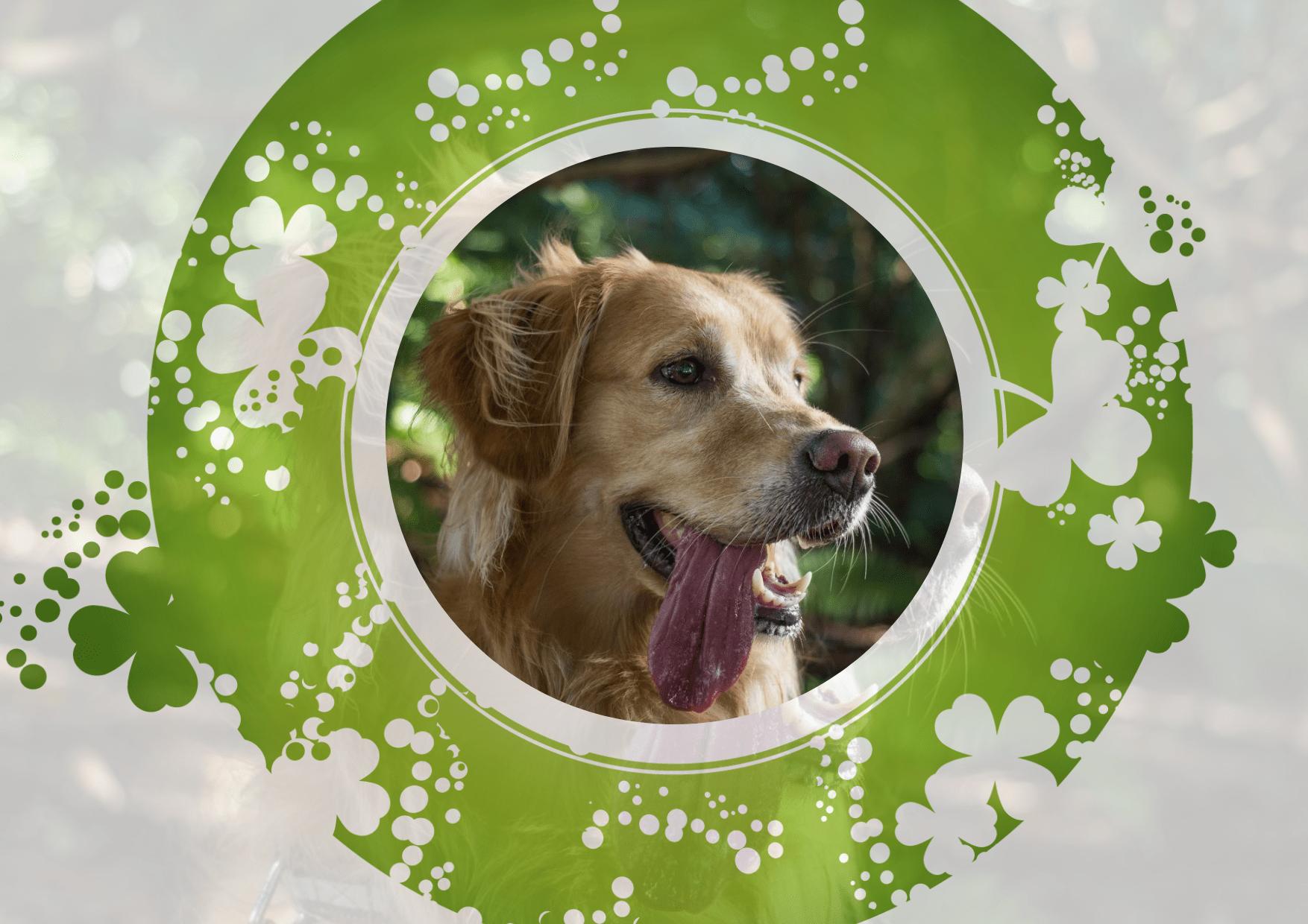 Dog,                Breed,                Product,                Puppy,                Love,                Mockup,                Frame,                Image,                Avatar,                White,                Black,                Yellow,                Lime,                 Free Image