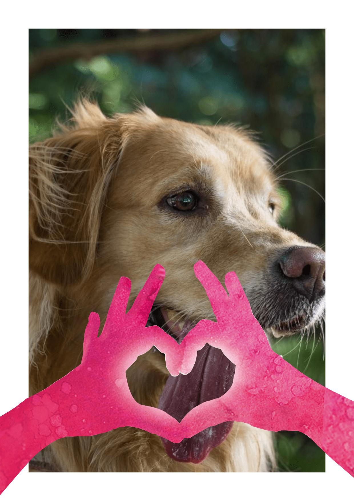Dog,                Mammal,                Vertebrate,                Breed,                Nose,                Image,                Avatar,                Love,                White,                Black,                Red,                 Free Image