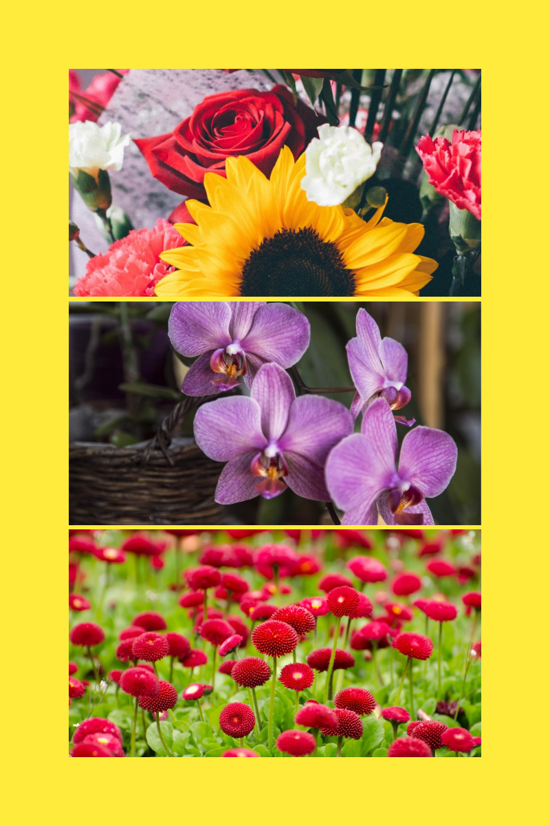 Flower,                Flora,                Plant,                Botany,                Land,                College,                Photos,                Images,                X3,                CollegeMaker,                Black,                Yellow,                Red,                 Free Image